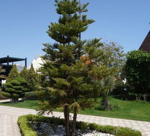 Nadelbäume Hotel Concorde De Luxe Resort