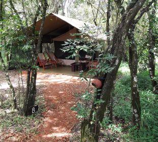 Unser Zelt Mara Bush Camp