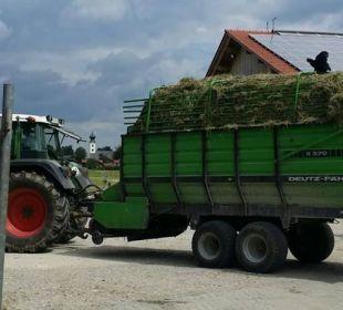 Huhn auf Traktor Bio-Bauernhof Zacherlhof