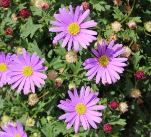Blumengrüße vom Hauserhof Hauserhof am Goldberg