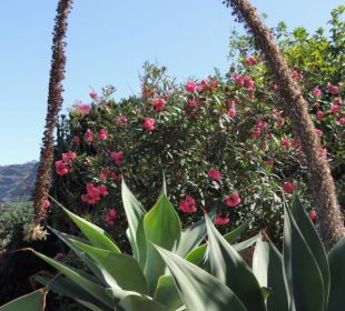 Ausblick von der Terrasse Finca El Rincon