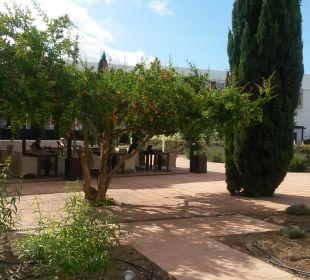 Garten mit Bar im Hintergrund  Fuerte Conil & Costa Luz Resort