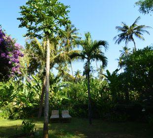 Ausblick Saraswati Holiday House