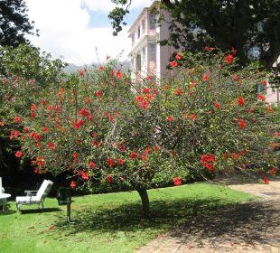 Blühende Bäume Belmond Mount Nelson Hotel