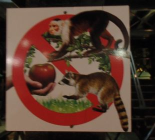 Bitte die Tiere nicht füttern Hotel & Club Punta Leona