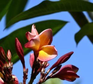 Blumen Saraswati Holiday House