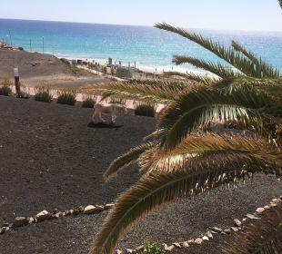 Blick zum Strand / zum Meer IBEROSTAR Hotel Playa Gaviotas