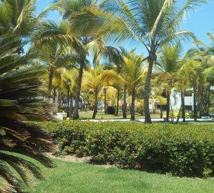 Top Gärtner Occidental Punta Cana