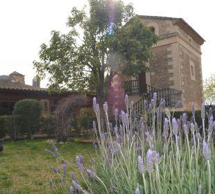 Lavendelblüten im April Agroturismo S'Hort de Son Caulelles