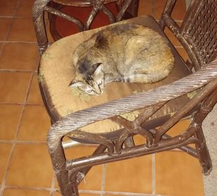 Sie hat uns jeden Abend besucht, jeden! Hotel Coral Cove Chalet