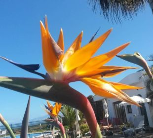 Bluete Hotel Luz Del Mar