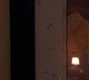 Fliegen hinter Bilderrahmen alpincenter & van der Valk Hotel Wittenburg
