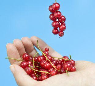Köstliche Früchte aus dem eigenen Garten Silence & Schlosshotel Mirabell
