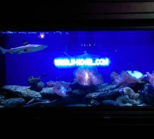 Aquarium eingang K-Hotel K Hotel