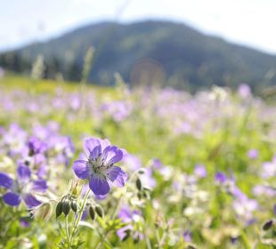 Blumen mit Riedberger Horn  Hubertus Alpin Lodge & Spa