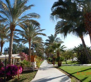 Was für Palmen Brayka Bay Resort