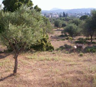 Ausblick von den Apartments Hotel Karavos