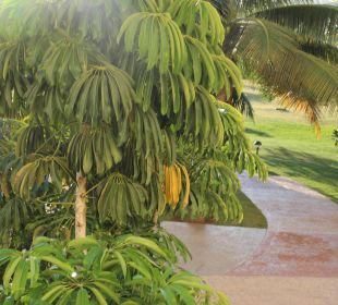 Garten Hotel Quinta Avenida Habana