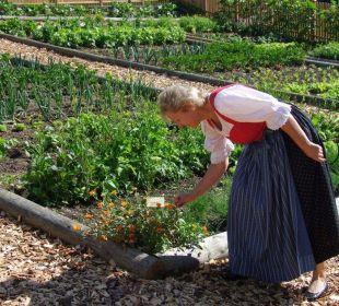 Hauseigener Kräuter- und Gemüsegarten Hotel Pulverer