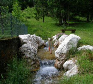 Wassertrettbecken im Bach Pension Auf'm Feggenlehen