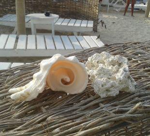 Am Strand gefunden