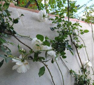 Rosen im Osten Holiday Residence Rifugio