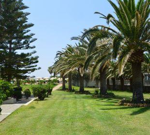 Ogród przy plaży  Hotel Minos Mare Royal
