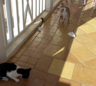 Die katzen waren überall und bettelten Hotel Samira Club