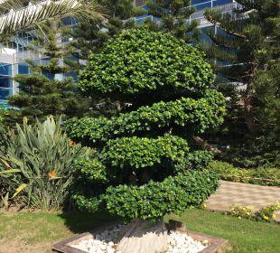 Bonsai  Hotel Concorde De Luxe Resort