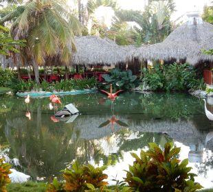 Flamingos vor dem Grill-Restaurant Hotel Natura Park Resort & Spa