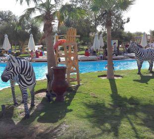 Zebra Jungle Aqua Park