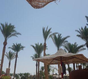 Palmen am Strand Hotel Iberotel Makadi Beach