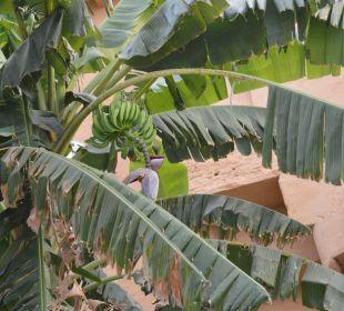 Garten Hotel Deogarh Mahal