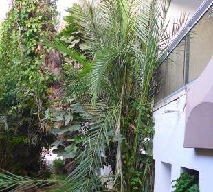 Ausblick für einige Zimmer Royal Lido Resort & Spa