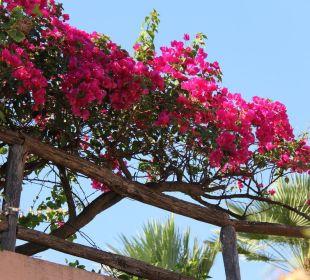 Überall wunderschöner Hibiscus Hotel Residence Fenicia