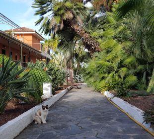 Außenanlage mit Katze Apartments Ambassador