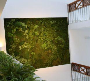 Echtes Moos als Wandbild Hotel Playa Esperanza
