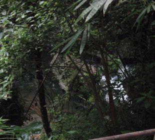 Blick auf den Fluß Hotel Nandini Bali Jungle Resort & Spa