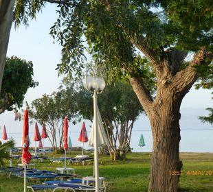 Olivenbäume Hotel Robolla Beach