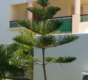 Gartenanlage Lindos Princess Beach Hotel