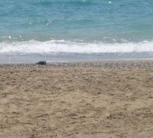 Sand sehr heiß Club Aldiana Side (Vorgänger-Hotel – existiert nicht mehr)