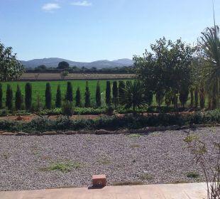 Ansicht von Schafen Agroturisme Can Pere Rei