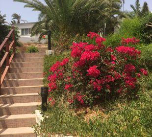 Gartenanlage   Marina Playa Suite Hotel