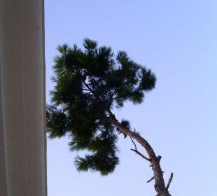 Pinie vor dem Hotel Hotel Forest Park