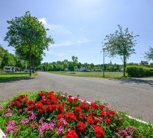 Gartenanlage Alfsee Ferien- und Erholungspark - Ferienhäuser
