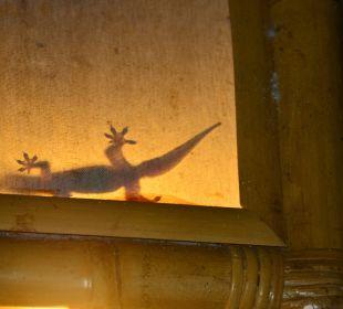 Gecko  Saraswati Holiday House
