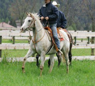 Urlaub mit eigenem Pferd Hotel Hubertushof