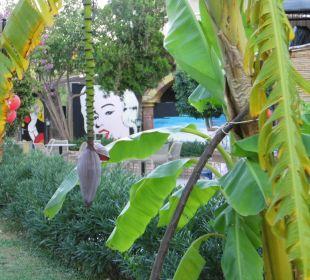 Babanbaum mit Blüte Bella Resort & Spa