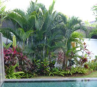 Blick in den Garten von der Villa aus The Samaya Bali - Seminyak