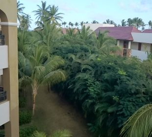 Ausblick  Now Larimar Punta Cana